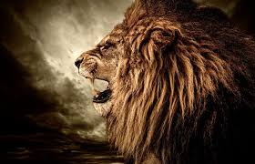 A tale of two <b>lions</b> | Angelus News