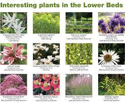 garden plant lists 1 780x643
