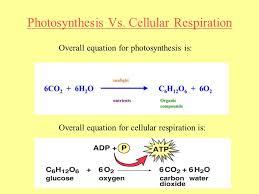 photosynthesis ppt talkchannels