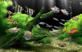 tropical aquarium wallpaper. Perfect Aquarium Dream Aquarium Is A Nextgeneration Virtual Aquarium U0026 Screensaver That  Brings The Beauty Of Lush Freshwater Aquariums To Your Computer With Unsurpassed  For Tropical Wallpaper R