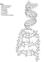 Dna Coloring Pages Dna Coloring