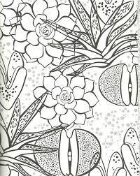flower designs coloring book elegant succulent coloring page rock plant zebra plant aloe and more