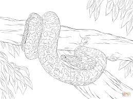Nine Banded Armadillo Coloring Page Obrazky