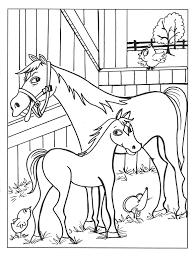 Kleurplaat Paard Paarden Info