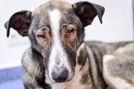 bleeding of the retina in the eye in dogs