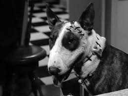 sparky the dog frankenweenie. a real stroke of genius, the most poignant part story, where sparky is cornered without hope escape, takes place in dilapidated windmill, dog frankenweenie f