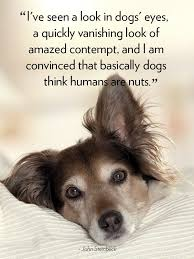 Quotes About Dogs Gorgeous 48 Cute Dog Love Quotes Puppy Sayings And Dog Best Friend Quotes