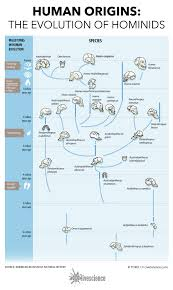 Hominin Chart Human Origins How Hominids Evolved Infographic Live Science