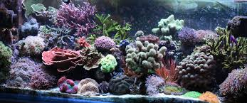 Funny Fish Tank Decorations Aquarium Coral Reef Decor Aquarium Plants Pinterest Decor