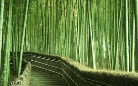 Bosque De Bambú Kyoto Japón Grass Reed Bamboo Schoonheid En