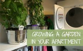apartment gardening. Simple Gardening How To Grow A Garden In Your Apartment For Gardening S