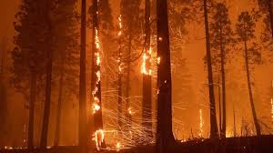 The caldor fire which now exceeds 65,000 acres is zero percent contained. Unfv3 Demvd8hm