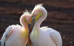 Beautiful Birds Hd Wallpapers ...