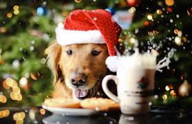christmas puppies wallpaper. Perfect Puppies Christmas Puppies U0026 Kittens Wallpapers New Tab In Wallpaper I