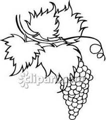 grapes clipart black and white. black and white bunch of grapes on a vine - royalty free clipart picture