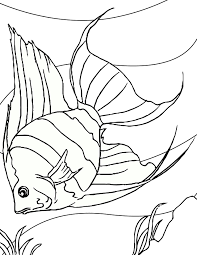 Small Picture Angelfish Coloring Page Handipoints