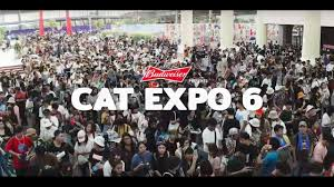 Budweiser Presents Cat Expo 6 - YouTube
