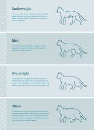 Dog Cat Body Condition Chart Burns Pet Food