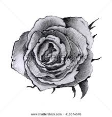 Small Picture Rose Sketch Hand Drawn Vector Can Stock Vector 175419896