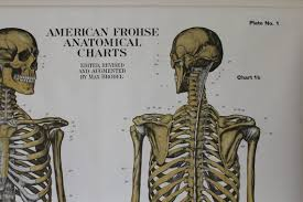 Human Skeleton Wall Chart American Frohse Human Anatomy Wall Chart Plate 1 Skeletal System