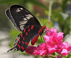 real beautiful colorful butterflies. Wonderful Real The Breathtaking Colors Of Most Beautiful Butterflies 17 Pictures 9 Inside Real Beautiful Colorful Butterflies I