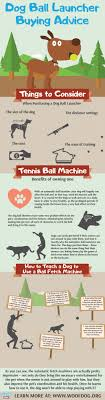 infographic with things to consider when ing dog ball throwing machine