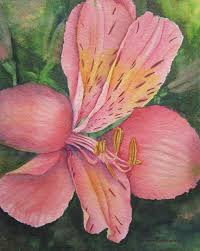 pink lily flower painting art print of original alstroemeria watercolor by barbara rosenzweig matted 16x20