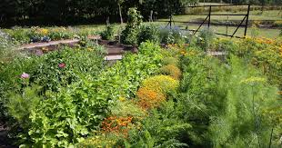 to plant your first vegetable garden