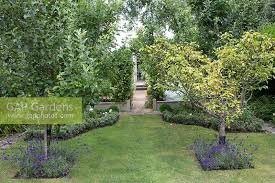 GAP Gardens  Lawn With Fruit Trees And Lavender Underplanting Underplanting Fruit Trees