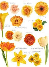 diffe types of wedding flowers with pictures names of diffe types oranges trend home design