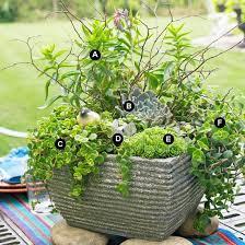 Growing Succulents In Containers Gardeneru0027s SupplySucculent Container Garden Plans
