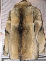 hsi says illegal dog fur s sold in australia