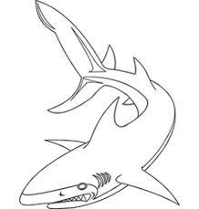 Shark Outline Vector Images Over 890