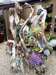 Small Picture 745 best SUCCULENT MADDNESS images on Pinterest Succulents