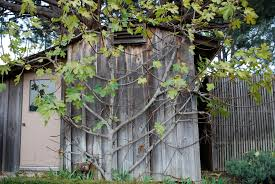 Fall And Winter Care For Fruit TreesDormant Fruit Trees