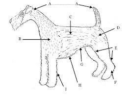 North Of England Irish Terrier Club Trimming Page
