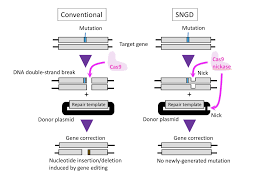 Genome Editing New Genome Editing Method Cuts Back On Unwanted Genetic Mutations