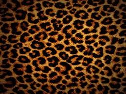 animal print desktop wallpaper. Cheetah Print Hd Wallpaper Intended Animal Desktop