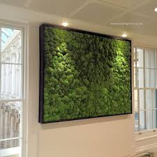 Small Picture Preserved Bun Moss Wall Panel with a Black Frame in an Office