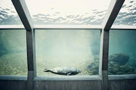 the pros and cons of starting an aquarium maintenance business