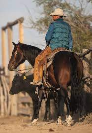 Welch Cattle Company - Western Horseman