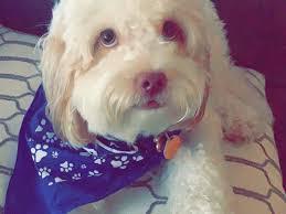 Fundraiser by Saher Bakhtiari : My Dog Oswaldo Needs Emergency Surgery