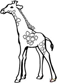 Kleurplaat Baby Giraffe Krijg Duizenden Kleurenfotos Van De Beste