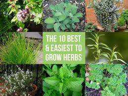 how to grow a herb garden. The 10 Best \u0026 Easiest To Grow Herbs How A Herb Garden