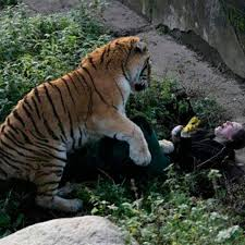 First picture of mum-of-three mauled by Siberian tiger in Russian ...