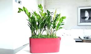 bathroom design fabulous good house plants uk low light