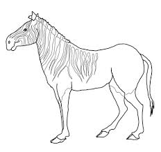 Small Picture Quagga Zebra coloring page Free Printable Coloring Pages