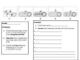Lytic And Lysogenic Cycle Venn Diagram Lytic And Lysogenic Cycle Worksheets Teaching Resources Tpt