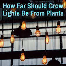 How Far Should Grow Lights Be From Plants Hid Led T5
