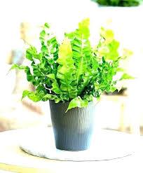 best indoor office plants. Plants For Office Desk Best Indoor  Good .